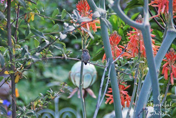In my garden 2