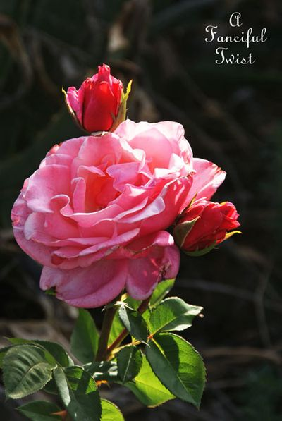 In my garden 26