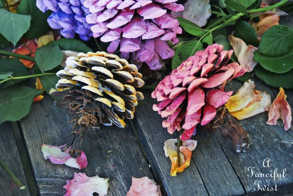 Pinecone flowers 5