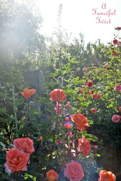 Secret garden 23