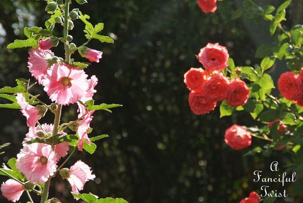 Cottage garden 11
