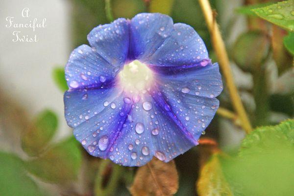 Rain flower 17