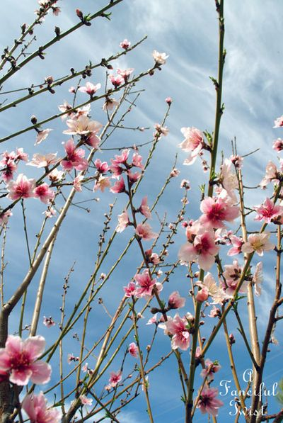 Blooming 5