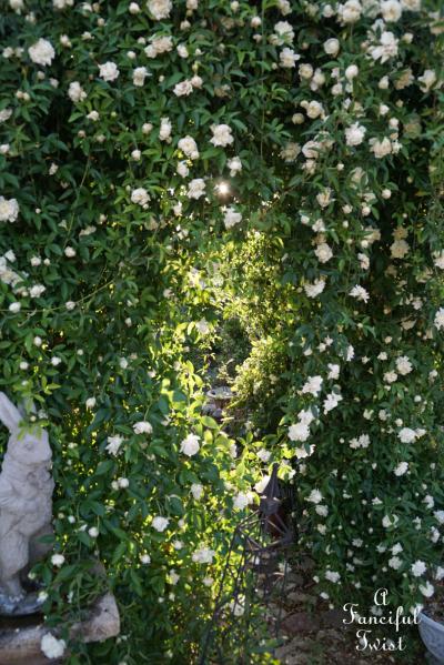 Rose arbor 14