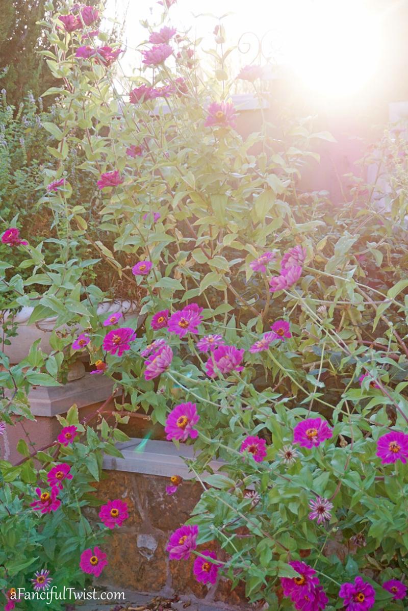 Autumn garden 30