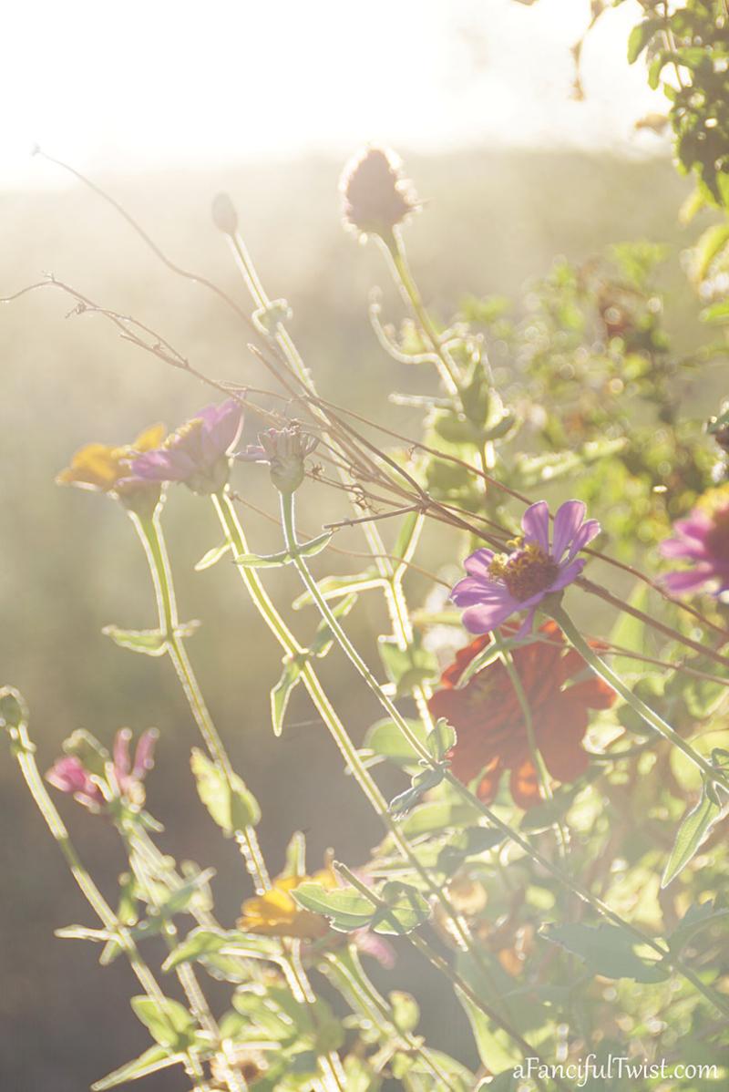 Autumn garden 27