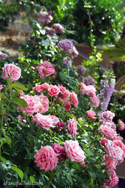 Garden love 18