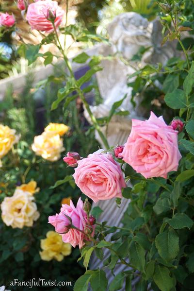 Garden love 5