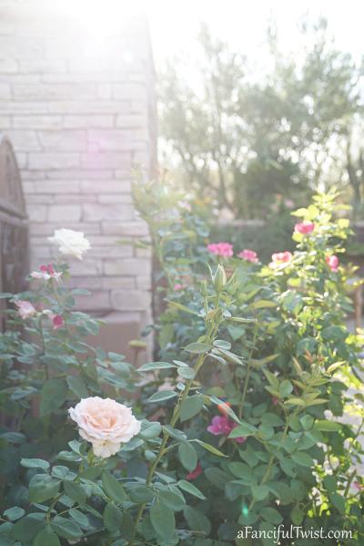 Home garden 12