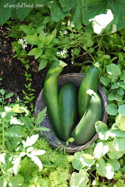 Home garden 26