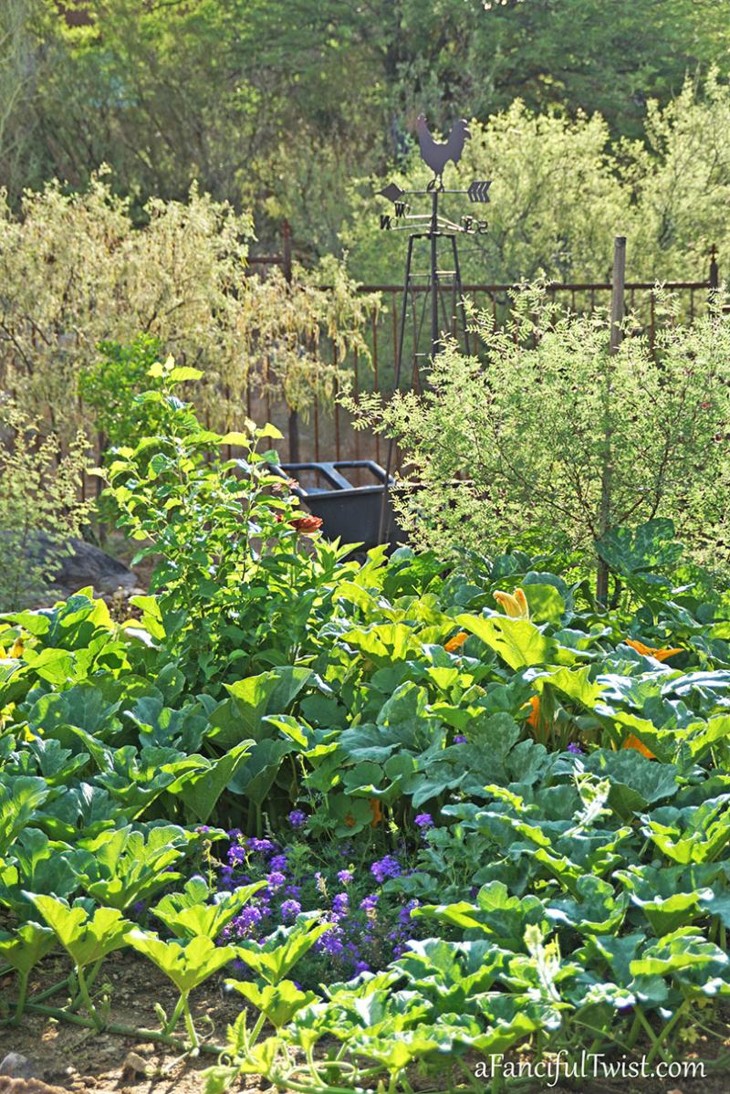 Home garden 16