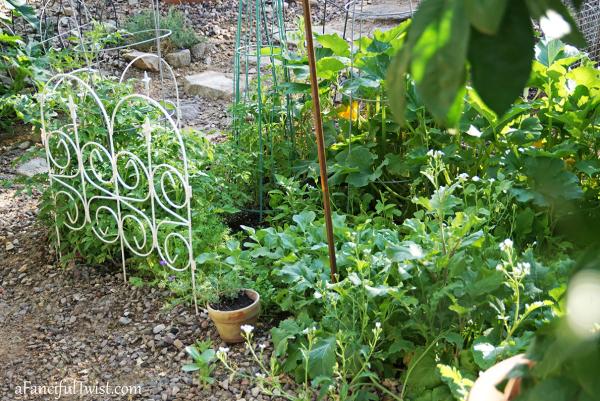 Home garden 21