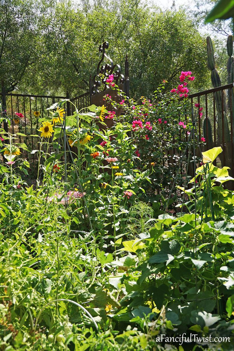 Sunflower summer 6
