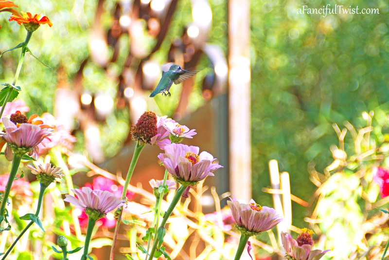 Floriferous november 10