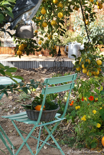 Winter garden 1