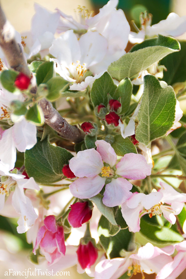 Apple Blossoms & Other Little Delights
