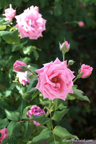 Garden love 19