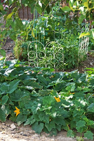 Home garden 19