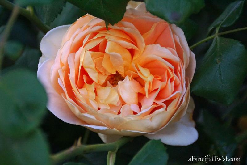 Garden love 9