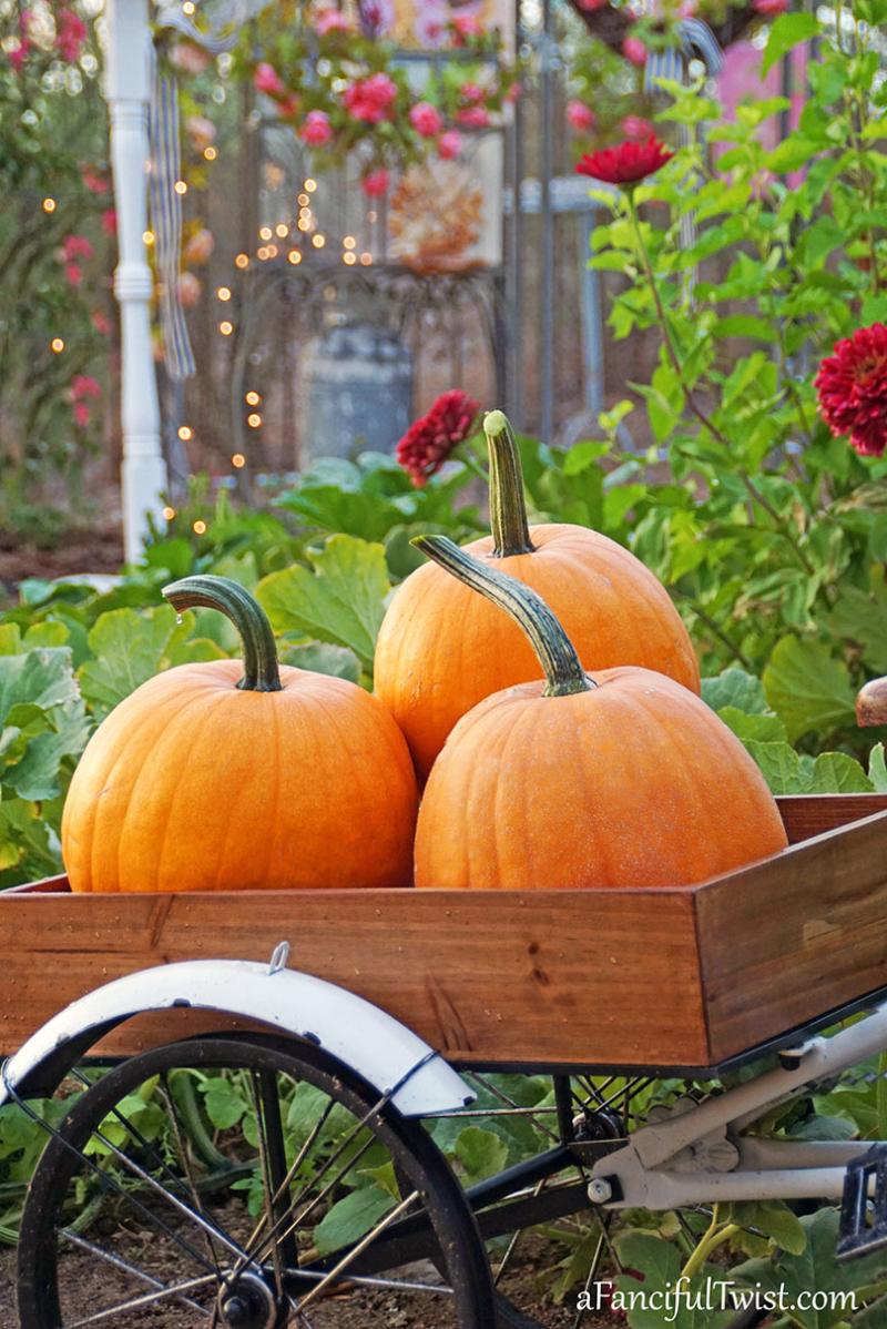 Autumn vibes 6
