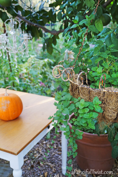 Autumn garden pumpkin patch 12