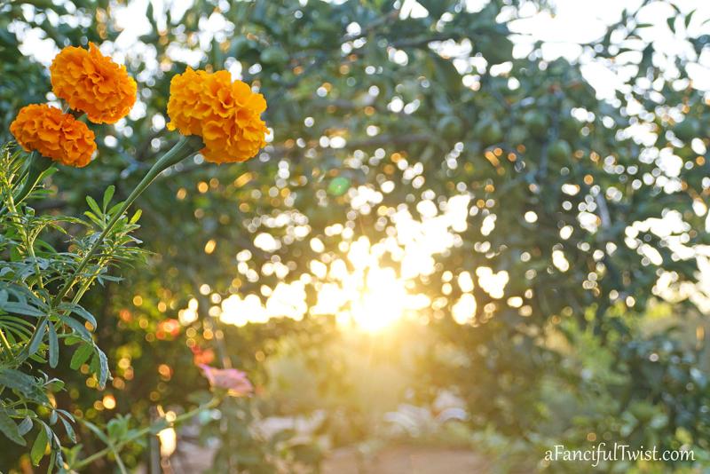 October garden 3