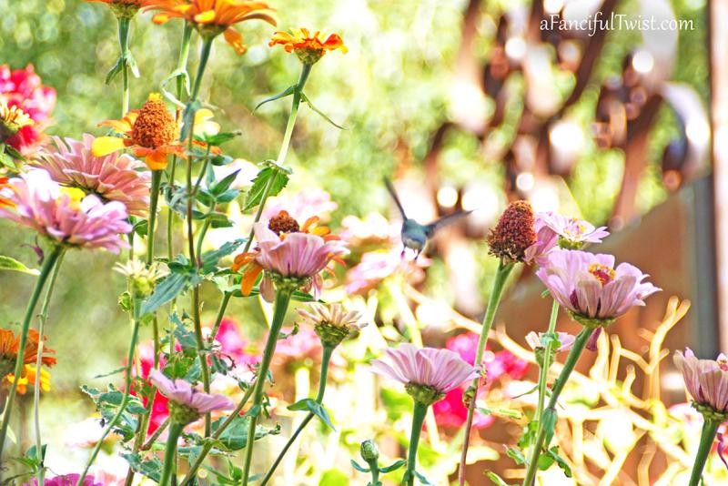 Floriferous november 11