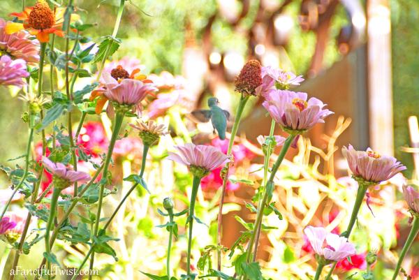 Floriferous november 12