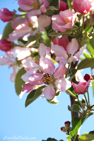 Apple spring 16