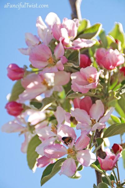 Apple spring 18