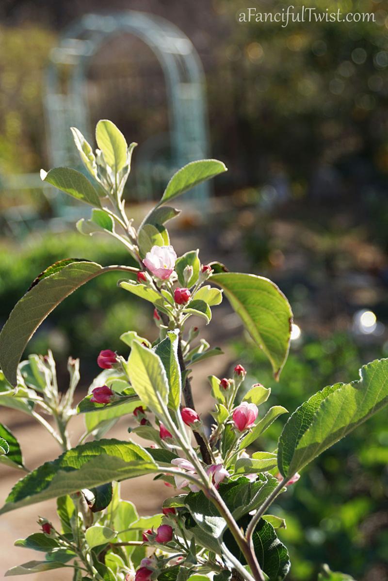 Apple spring 19