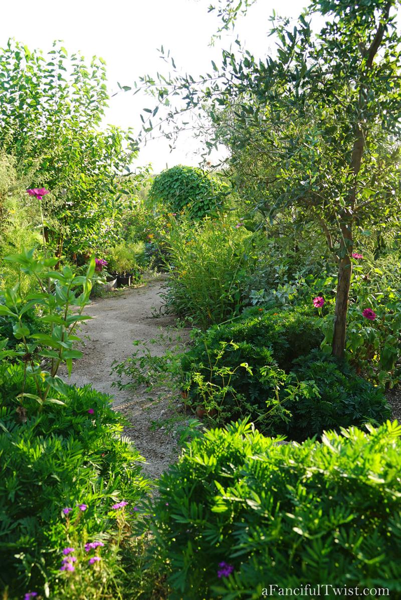 Thumbelina garden 2
