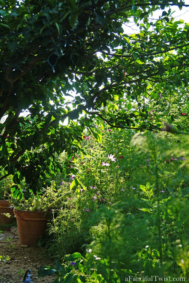 Thumbelina garden 7