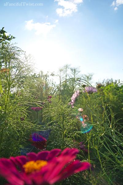 Thumbelina garden 8