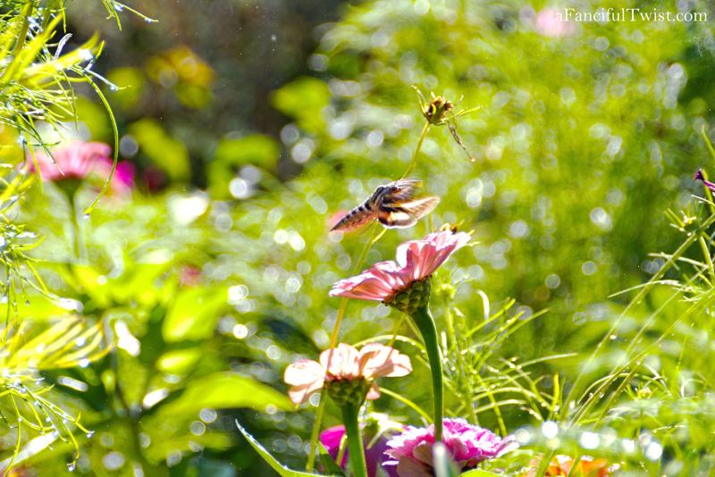 Butterfly summer 9