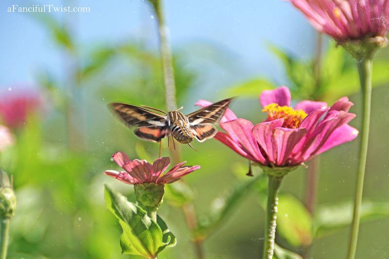 Butterfly summer 20
