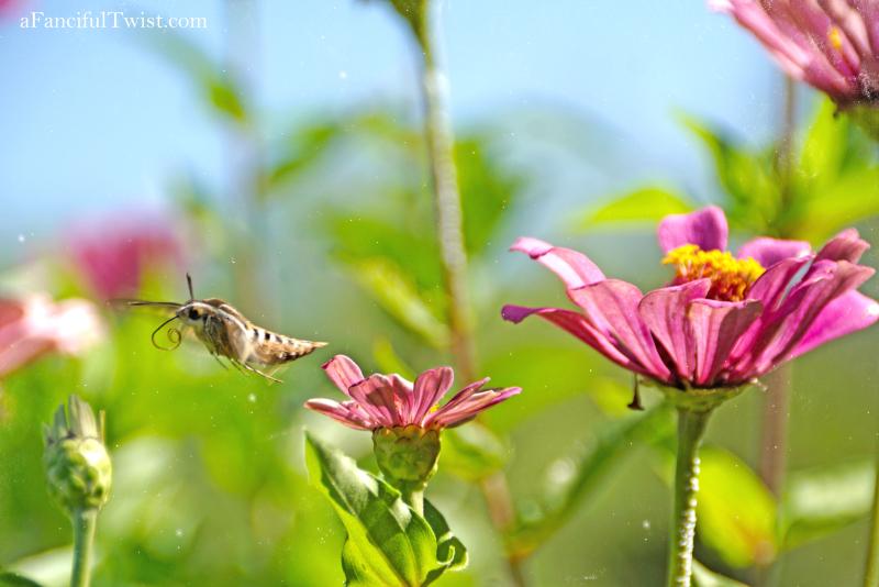 Butterfly summer 21