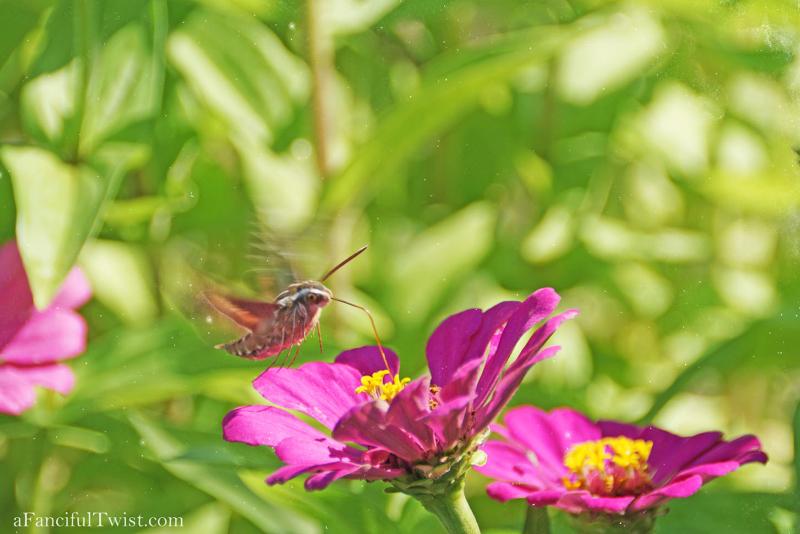 Butterfly summer 22