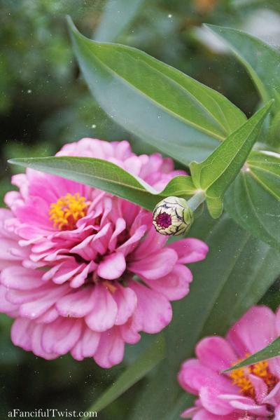 Butterfly summer 31
