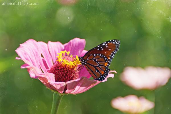 Butterfly summer 14