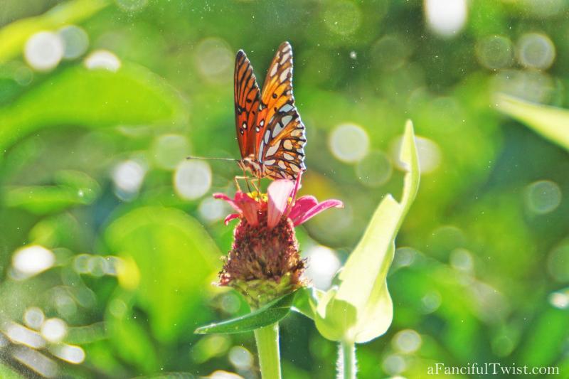 Butterfly summer 24