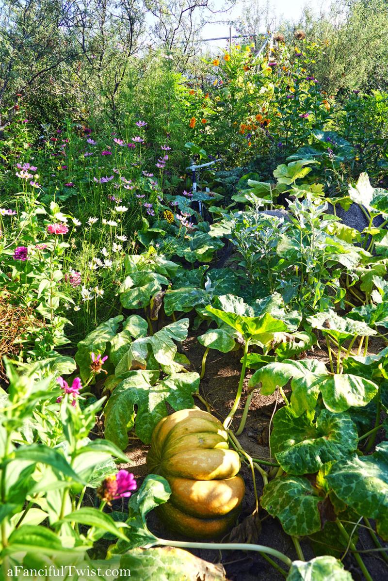 Cottage garden days 1