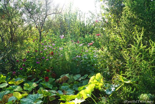 Cottage garden days 14