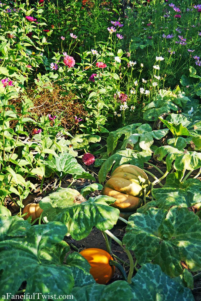 Cottage garden days 20