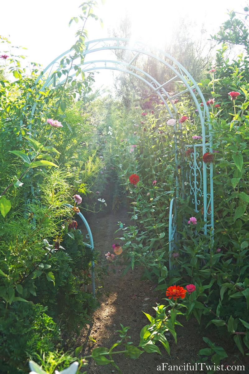 Cottage garden days 6