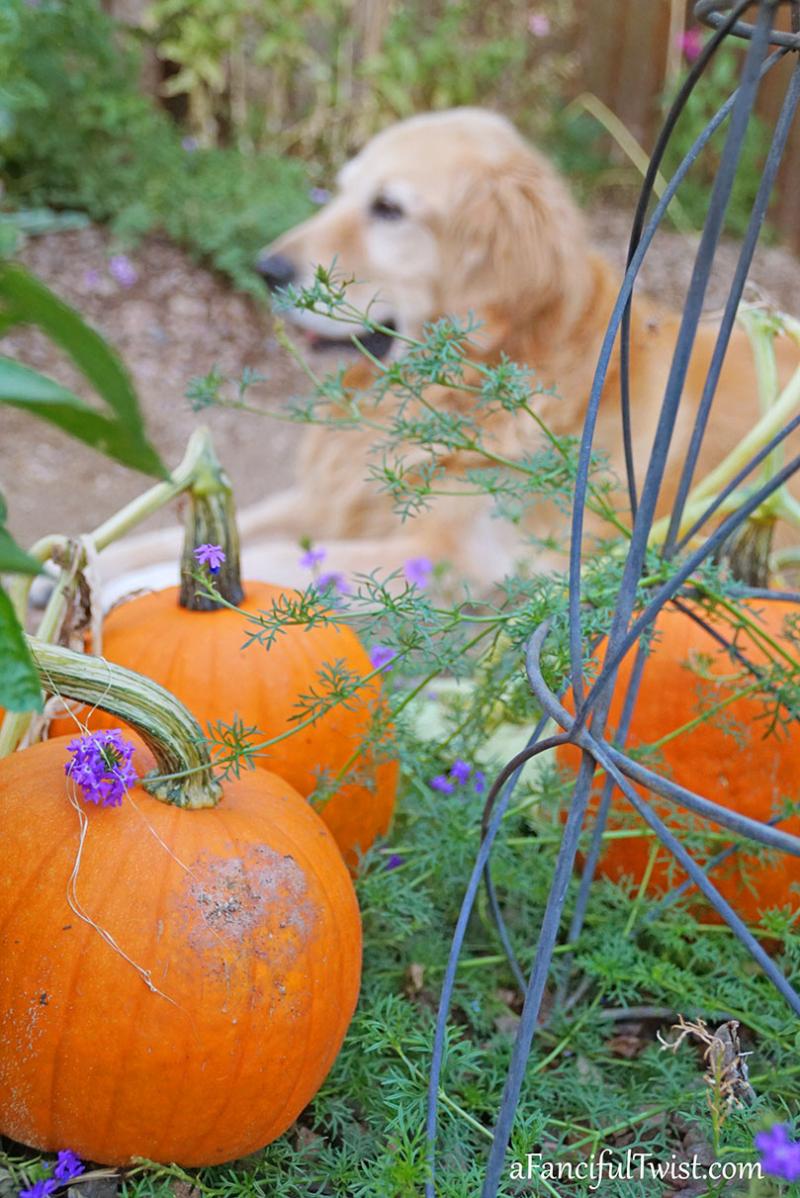 October garden 2