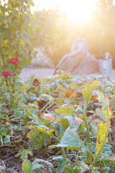 October garden 6