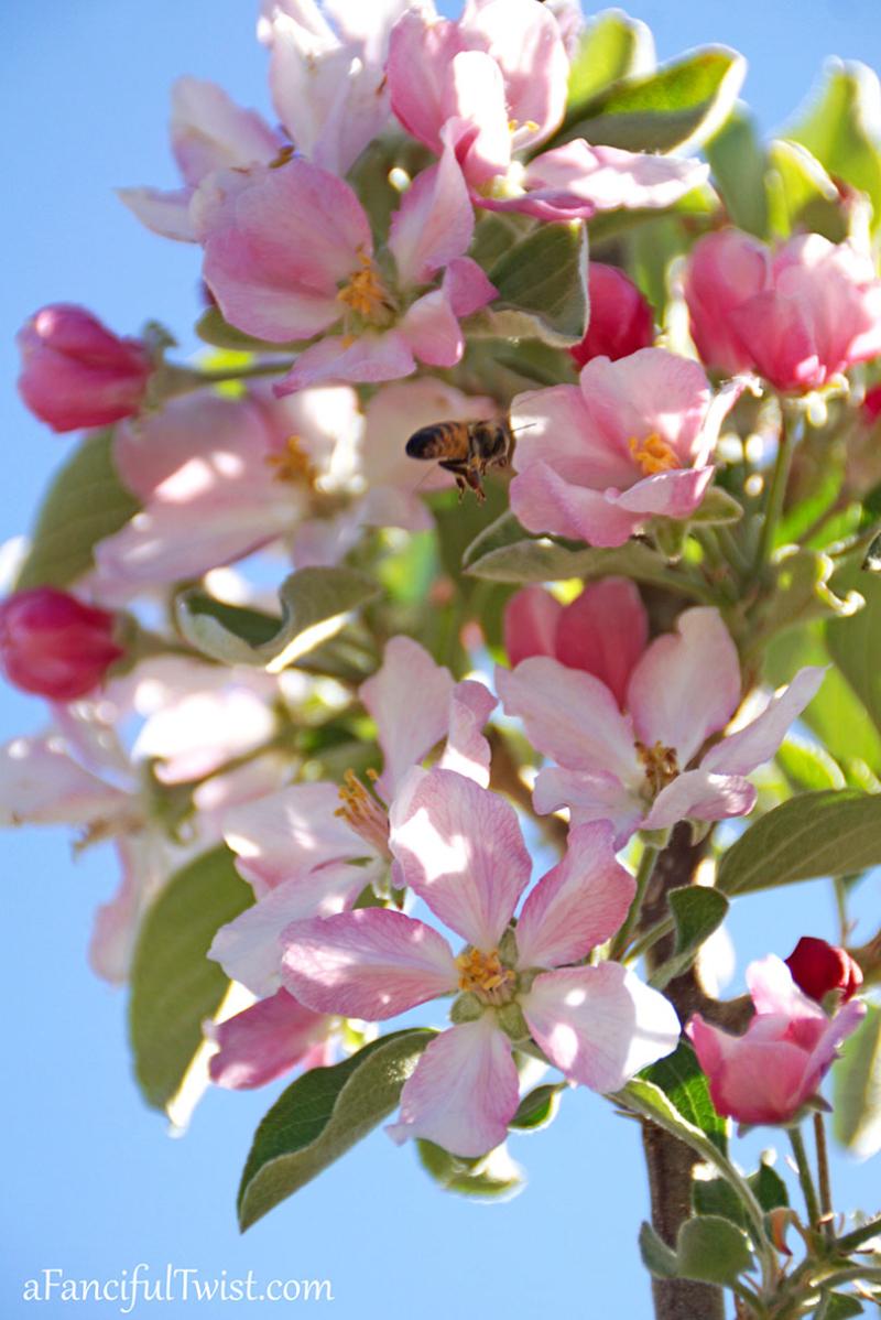 Apple spring 17
