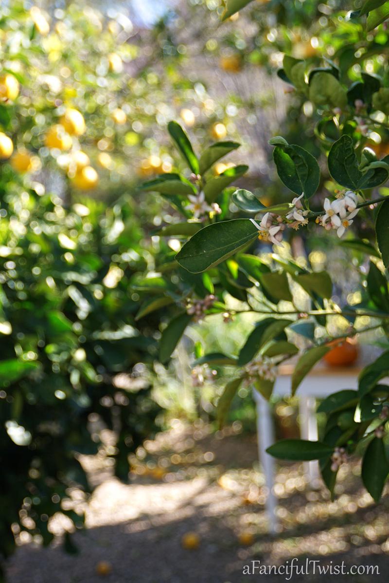 Apple spring 21