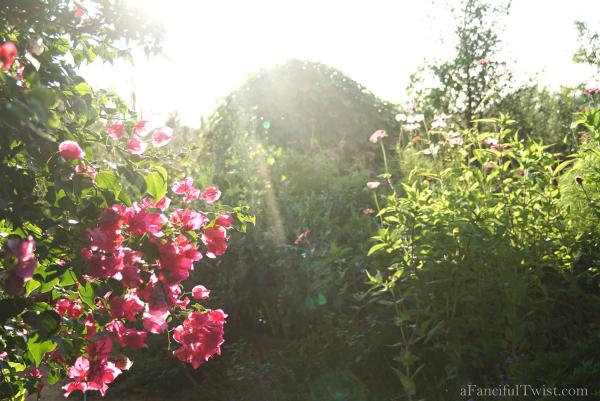 Thumbelina garden 1